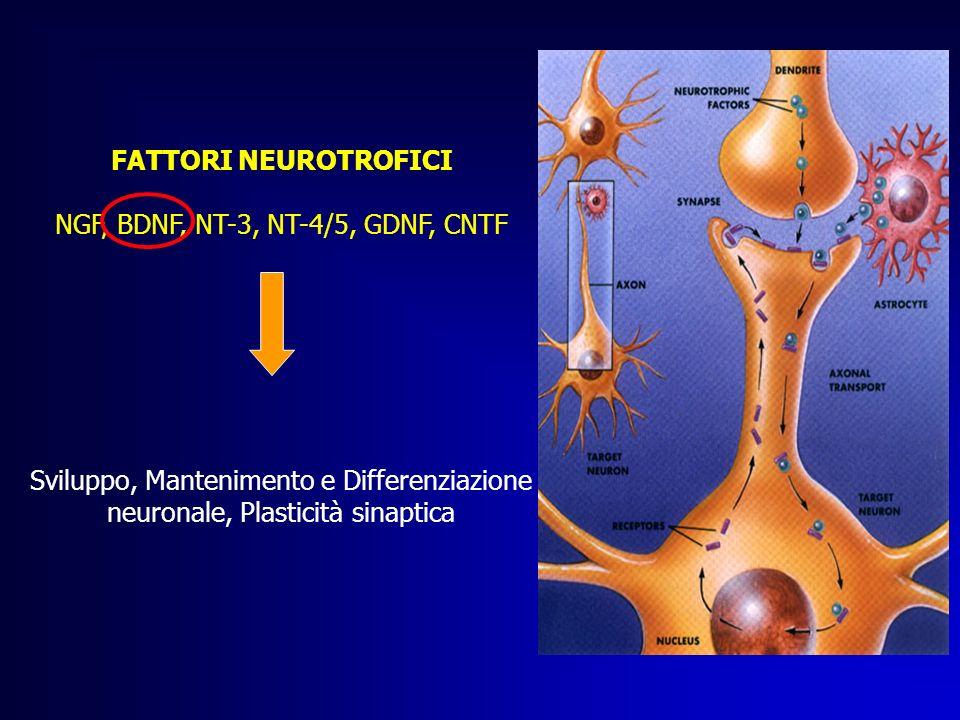 FATTORI NEUROTROFICI NGF, BDNF, NT-3, NT-4/5, GDNF, CNTF Sviluppo, Mantenimento e Differenziazione neuronale, Plasticità sinaptica