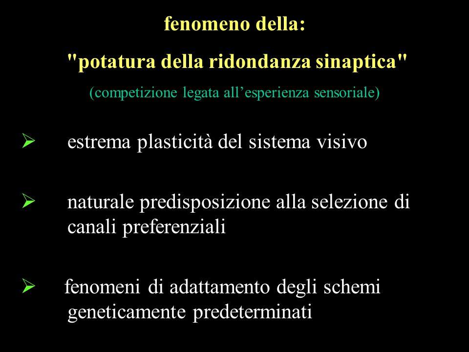 estrema plasticità del sistema visivo naturale predisposizione alla selezione di canali preferenziali fenomeni di adattamento degli schemi geneticamen