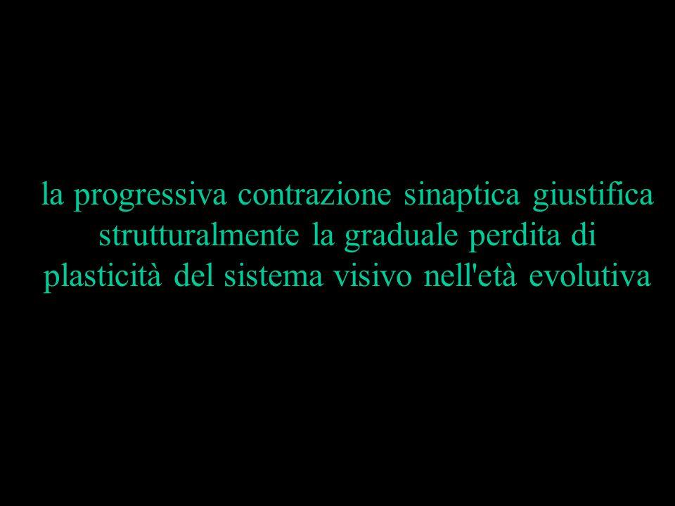 la progressiva contrazione sinaptica giustifica strutturalmente la graduale perdita di plasticità del sistema visivo nell'età evolutiva