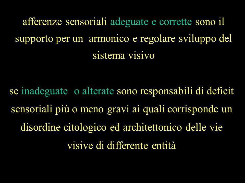 afferenze sensoriali adeguate e corrette sono il supporto per un armonico e regolare sviluppo del sistema visivo se inadeguate o alterate sono respons