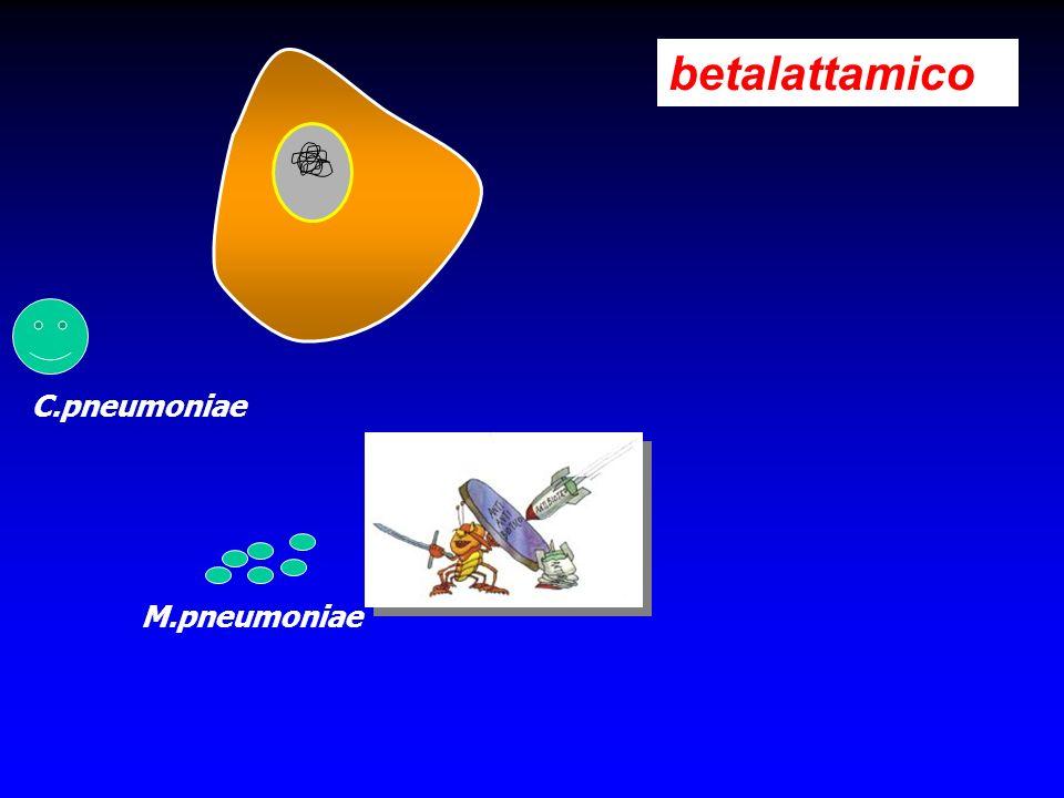 betalattamico M.pneumoniae C.pneumoniae