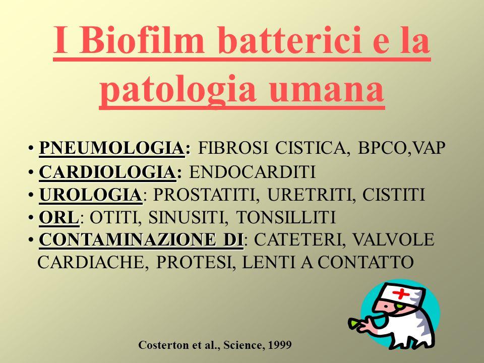 I Biofilm batterici e la patologia umana Costerton et al., Science, 1999 PNEUMOLOGIA: PNEUMOLOGIA: FIBROSI CISTICA, BPCO,VAP CARDIOLOGIA CARDIOLOGIA: