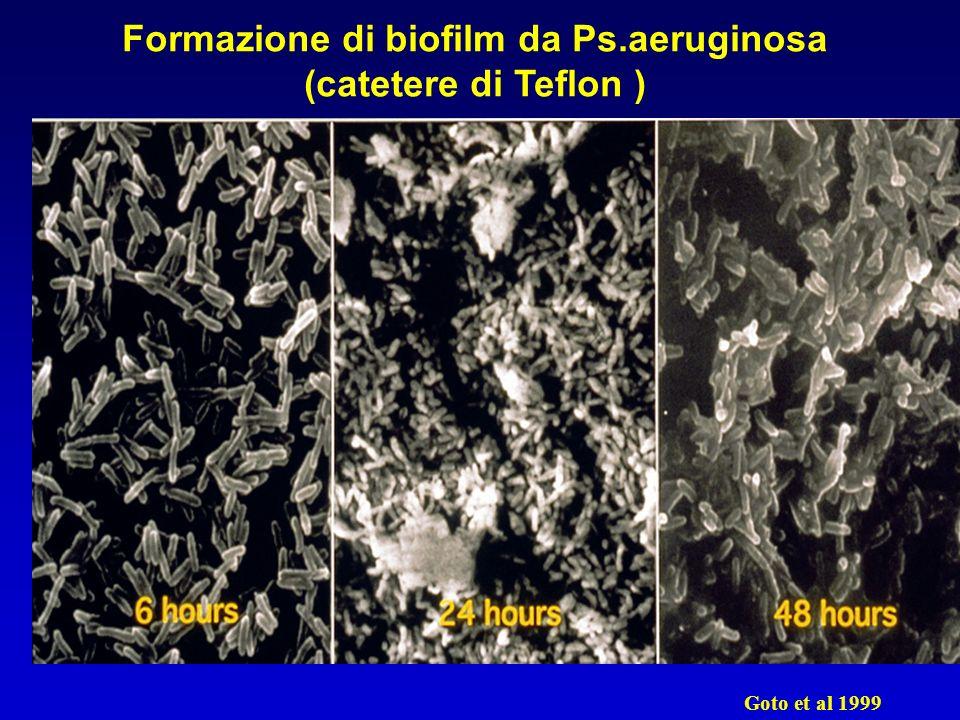 Formazione di biofilm da Ps.aeruginosa (catetere di Teflon ) Goto et al 1999