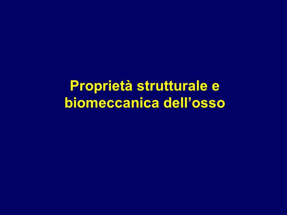 Proprietà strutturale e biomeccanica dellosso