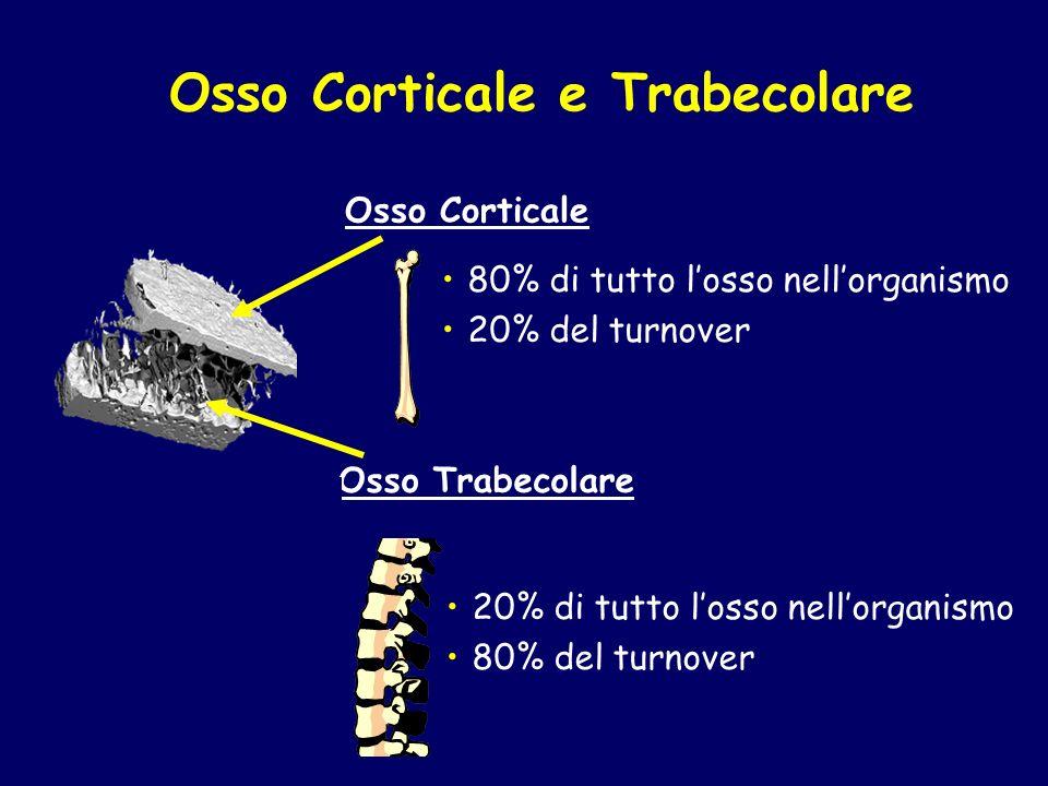 Osso Corticale e Trabecolare 80% di tutto losso nellorganismo 20% del turnover 20% di tutto losso nellorganismo 80% del turnover Osso Corticale Osso T
