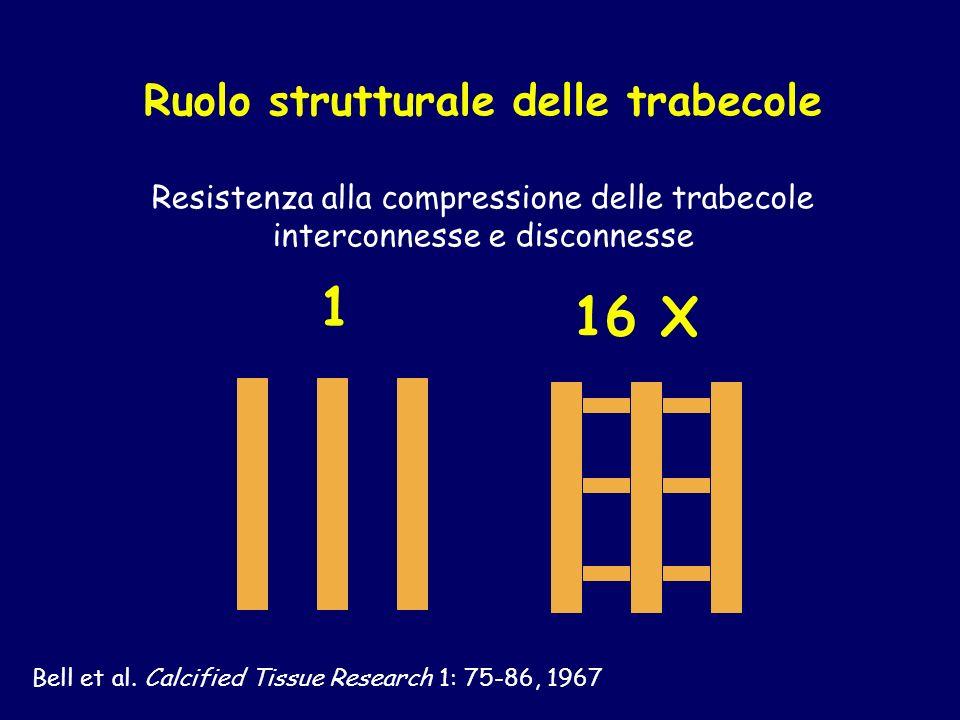 Ruolo strutturale delle trabecole Resistenza alla compressione delle trabecole interconnesse e disconnesse 16 X 1 Bell et al. Calcified Tissue Researc