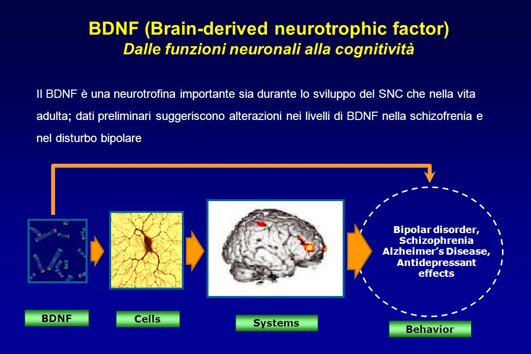 Bipolar disorder, Schizophrenia Alzheimers Disease, Antidepressant effects BDNF Systems Behavior Cells BDNF (Brain-derived neurotrophic factor) Dalle