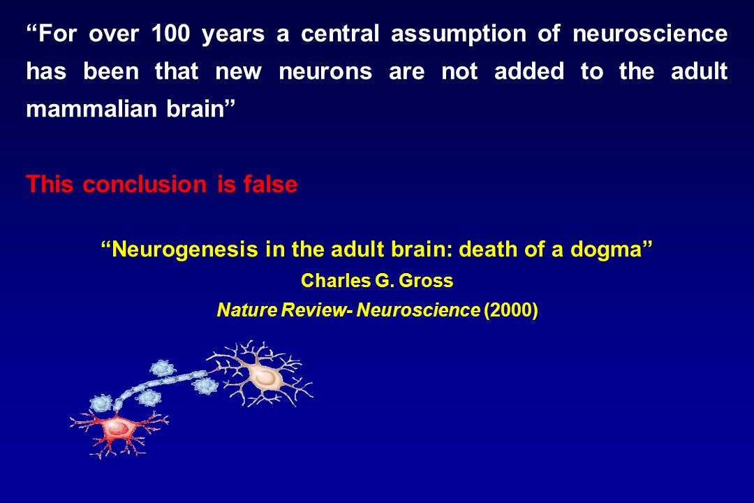 For over 100 years a central assumption of neuroscience has been that new neurons are not added to the adult mammalian brain This conclusion is false