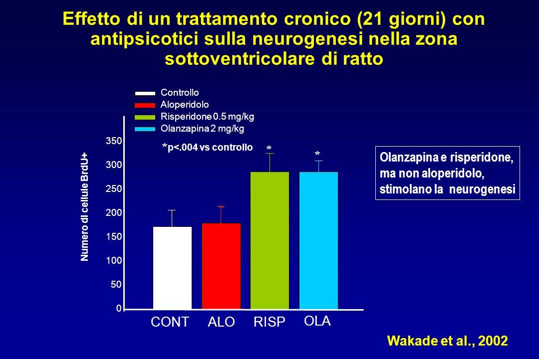 Numero di cellule BrdU+ 0 50 100 150 200 250 300 350 Controllo Aloperidolo Risperidone 0.5 mg/kg Olanzapina 2 mg/kg * p<.004 vs controllo Olanzapina e risperidone, ma non aloperidolo, stimolano la neurogenesi * * Effetto di un trattamento cronico (21 giorni) con antipsicotici sulla neurogenesi nella zona sottoventricolare di ratto Wakade et al., 2002 CONTALORISP OLA