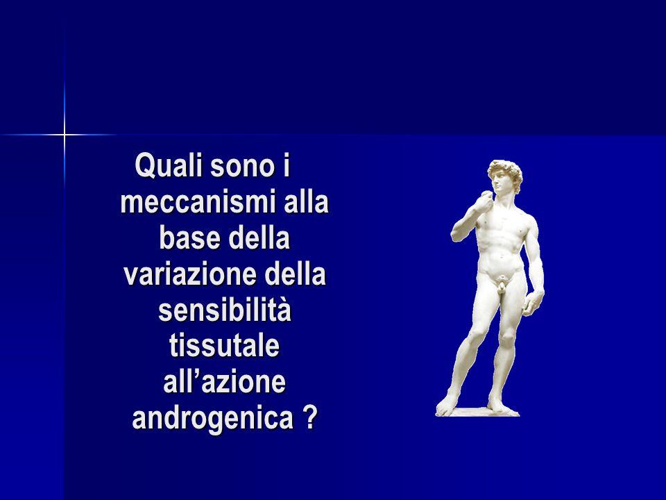 Quali sono i meccanismi alla base della variazione della sensibilità tissutale allazione androgenica ?