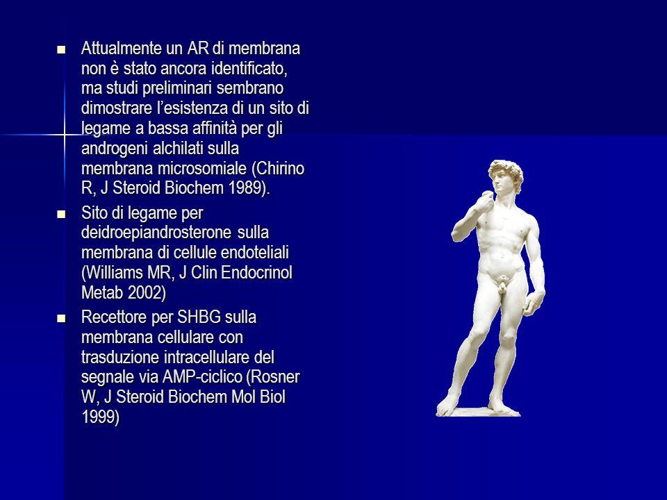 Attualmente un AR di membrana non è stato ancora identificato, ma studi preliminari sembrano dimostrare lesistenza di un sito di legame a bassa affinità per gli androgeni alchilati sulla membrana microsomiale (Chirino R, J Steroid Biochem 1989).