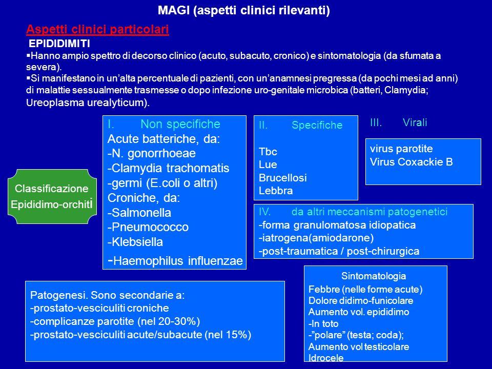 MAGI (aspetti clinici rilevanti) Aspetti clinici particolari EPIDIDIMITI Hanno ampio spettro di decorso clinico (acuto, subacuto, cronico) e sintomato