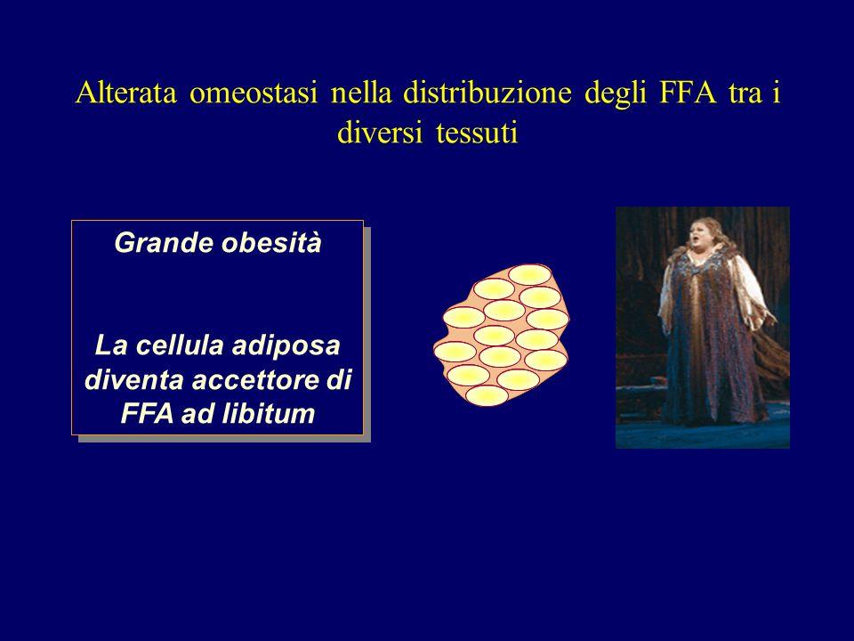 Alterata omeostasi nella distribuzione degli FFA tra i diversi tessuti Grande obesità La cellula adiposa diventa accettore di FFA ad libitum Grande obesità La cellula adiposa diventa accettore di FFA ad libitum