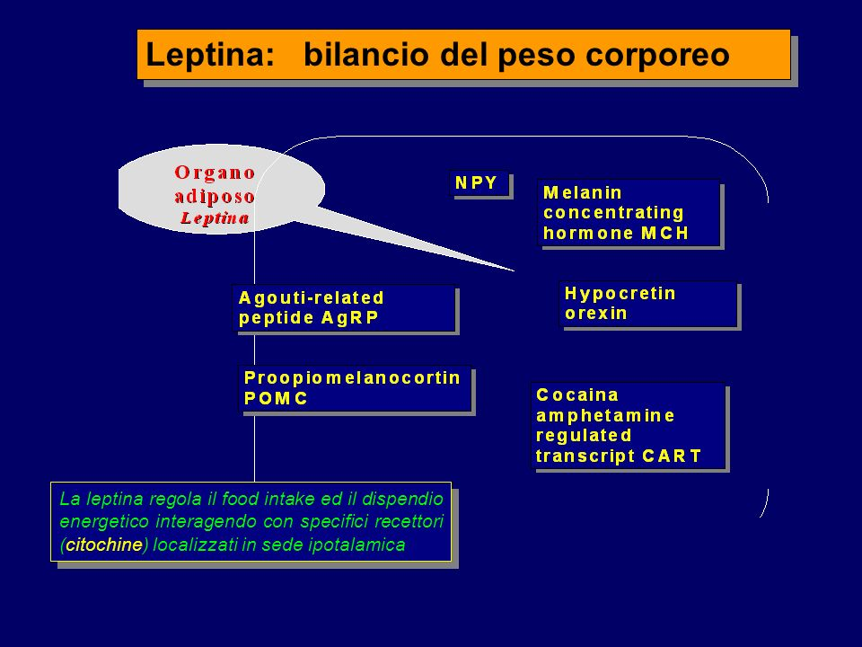 Leptina: bilancio del peso corporeo La leptina regola il food intake ed il dispendio energetico interagendo con specifici recettori (citochine) localizzati in sede ipotalamica