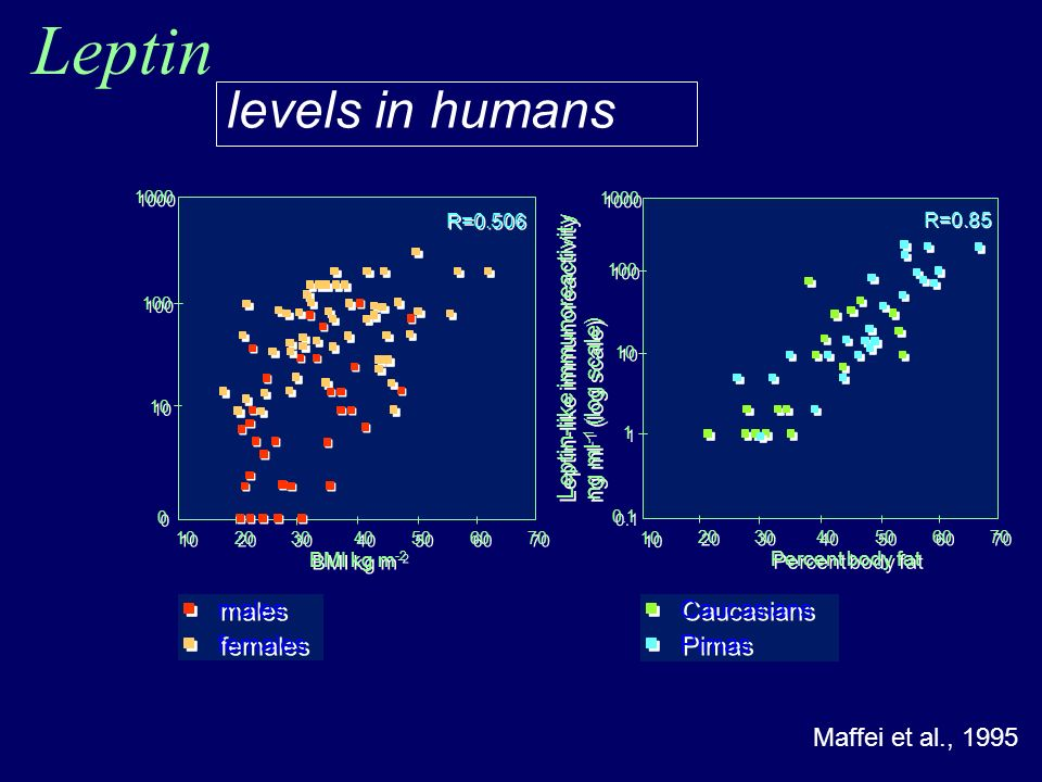 Leptin Maffei et al., 1995 levels in humans Caucasians Pimas Leptin-like immunoreactivity ng ml -1 (log scale) Leptin-like immunoreactivity ng ml -1 (