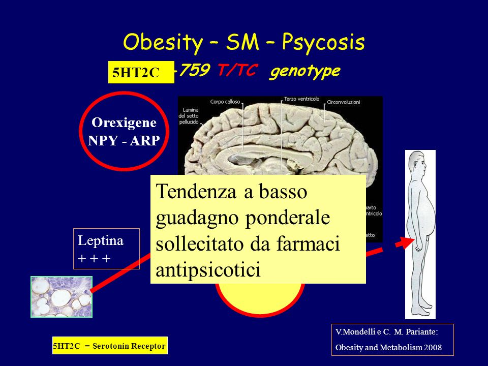 Obesity – SM – Psycosis -759 T/TC genotype Leptina + + + Anorexigene POMC-Cart Orexigene NPY - ARP V.Mondelli e C.