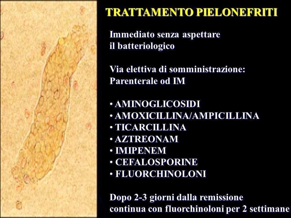 TRATTAMENTO PIELONEFRITI Immediato senza aspettare il batteriologico Via elettiva di somministrazione: Parenterale od IM AMINOGLICOSIDI AMINOGLICOSIDI