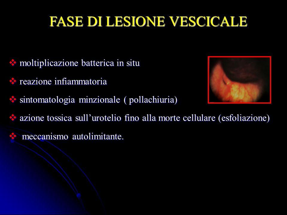 FASE DI LESIONE VESCICALE moltiplicazione batterica in situ moltiplicazione batterica in situ reazione infiammatoria reazione infiammatoria sintomatol