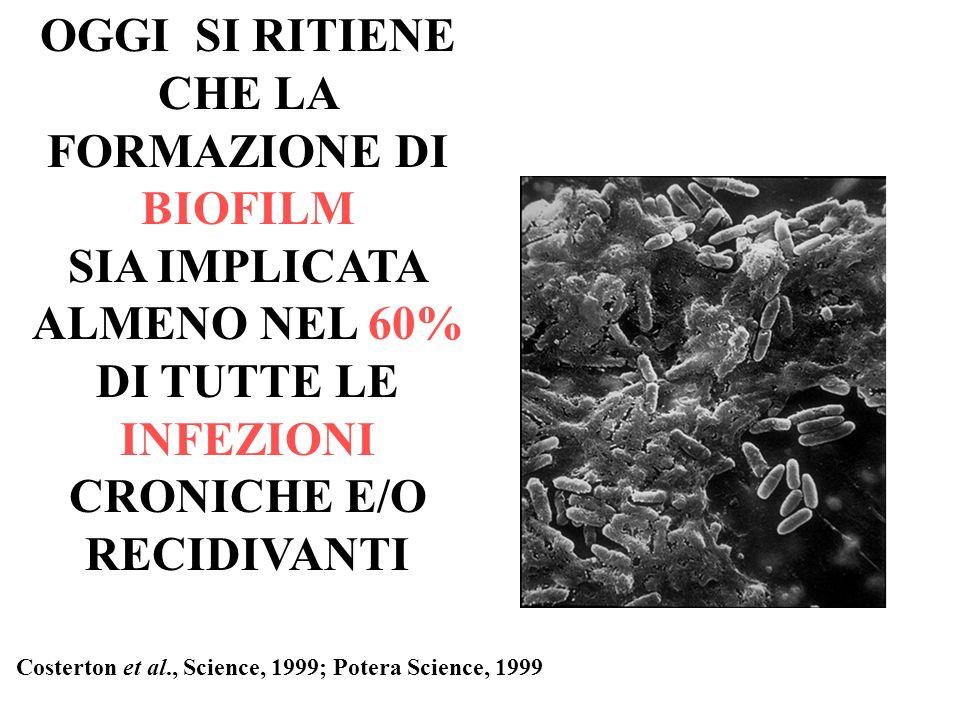 OGGI SI RITIENE CHE LA FORMAZIONE DI BIOFILM SIA IMPLICATA ALMENO NEL 60% DI TUTTE LE INFEZIONI CRONICHE E/O RECIDIVANTI Costerton et al., Science, 19