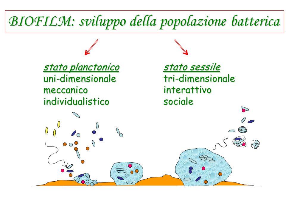 BIOFILM: sviluppo della popolazione batterica stato sessile tri-dimensionaleinterattivosociale stato planctonico uni-dimensionalemeccanicoindividualis
