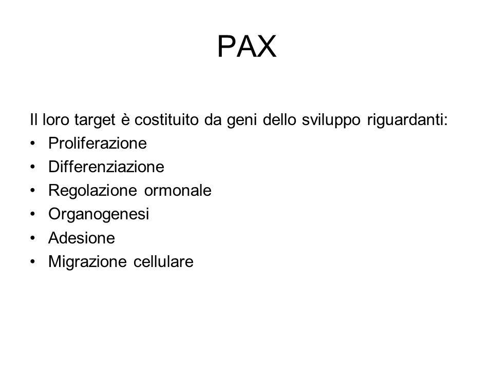 PAX Il loro target è costituito da geni dello sviluppo riguardanti: Proliferazione Differenziazione Regolazione ormonale Organogenesi Adesione Migrazi