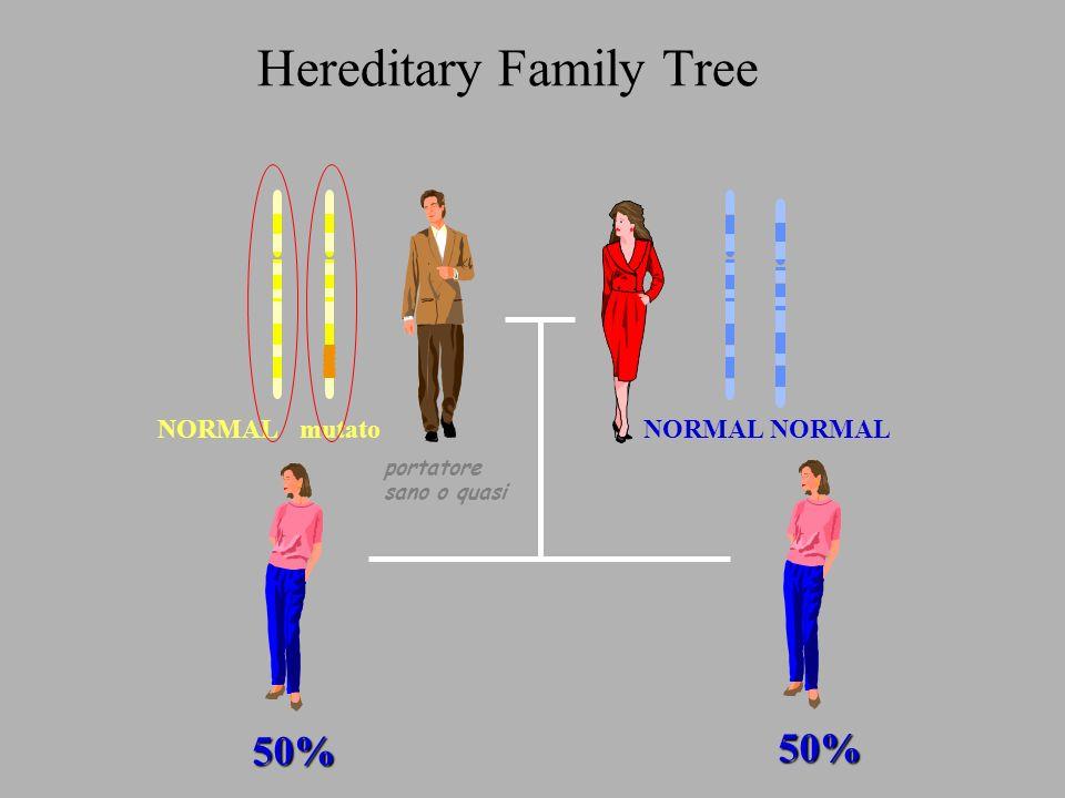 anomalie genetiche costitutive predisponenti al cancro della mammella eredo-familiare (malattia ereditaria autosomica dominante) Chromosome 17 24 Exon