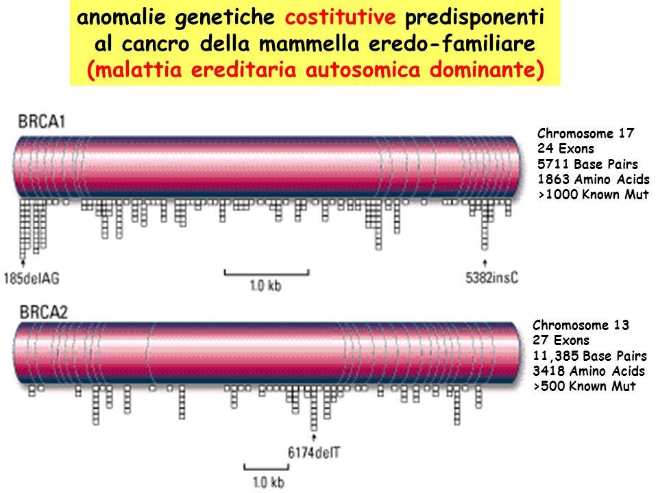 anomalie genetiche costitutive predisponenti al cancro della mammella eredo-familiare (malattia ereditaria autosomica dominante) Chromosome 17 24 Exons 5711 Base Pairs 1863 Amino Acids >1000 Known Mut Chromosome 13 27 Exons 11,385 Base Pairs 3418 Amino Acids >500 Known Mut