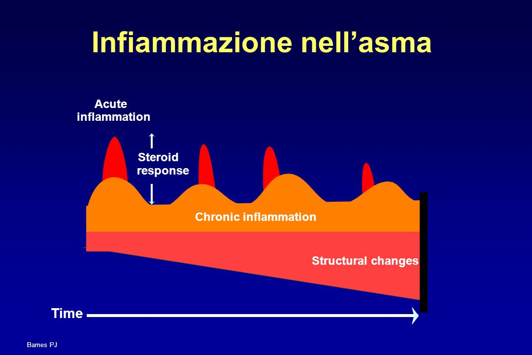 Chronic inflammation Structural changes Acute inflammation Steroid response Time Infiammazione nellasma Barnes PJ