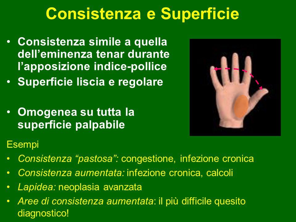 Consistenza e Superficie Consistenza simile a quella delleminenza tenar durante lapposizione indice-pollice Superficie liscia e regolare Omogenea su t