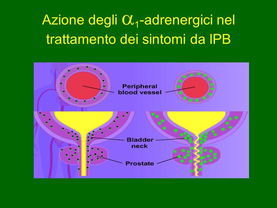 Azione degli 1 -adrenergici nel trattamento dei sintomi da IPB
