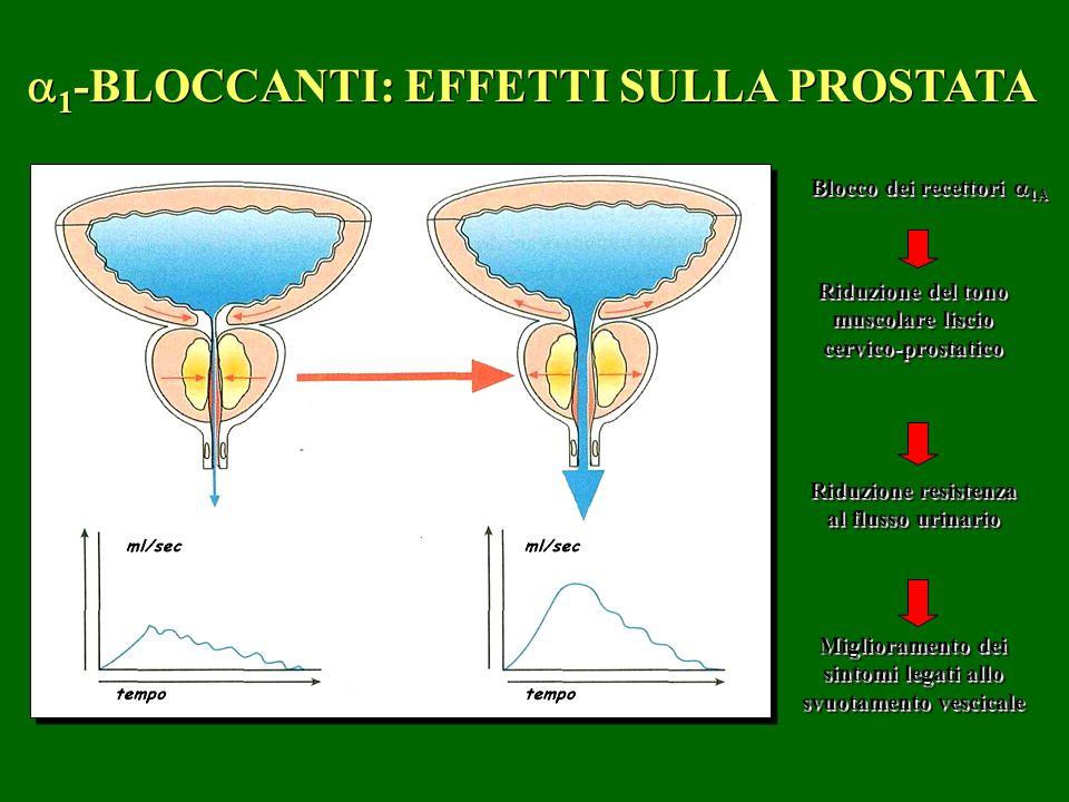 1 -BLOCCANTI: EFFETTI SULLA PROSTATA Blocco dei recettori 1A Riduzione del tono muscolare liscio cervico-prostatico Riduzione del tono muscolare lisci