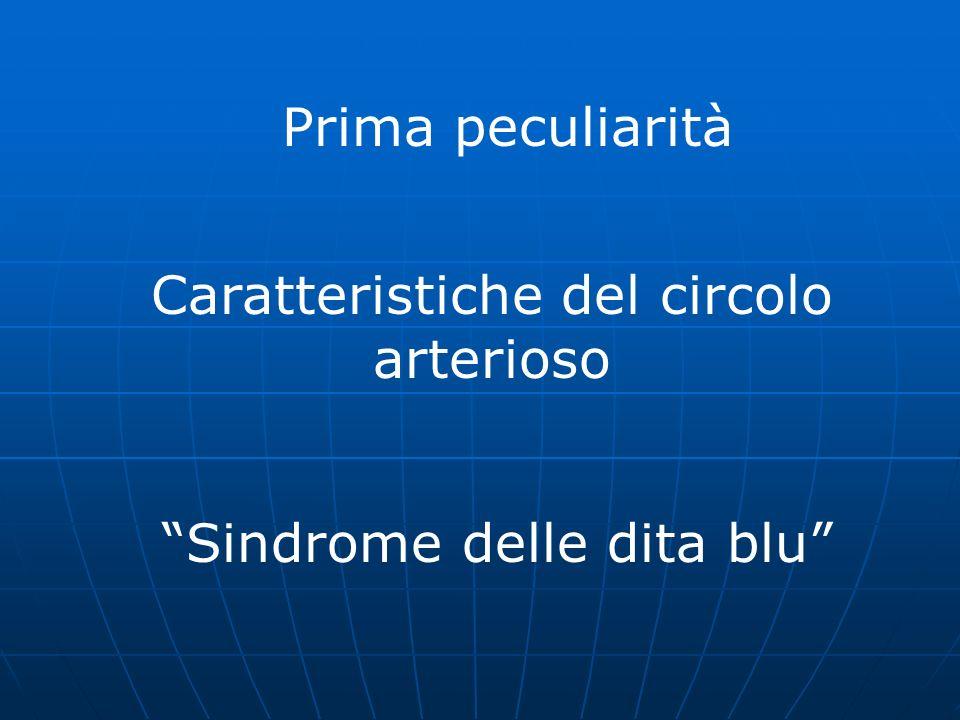 Prima peculiarità Caratteristiche del circolo arterioso Sindrome delle dita blu