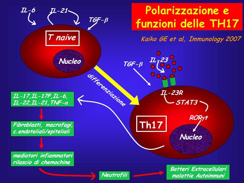 Th17 T naive IL-6 IL-21 TGF- IL-23 IL-23R STAT3 ROR t Nucleo IL-17,IL-17F,IL-6, IL-22,IL-21,TNF- differenziazione Fibroblasti, macrofagi, c.endotelial
