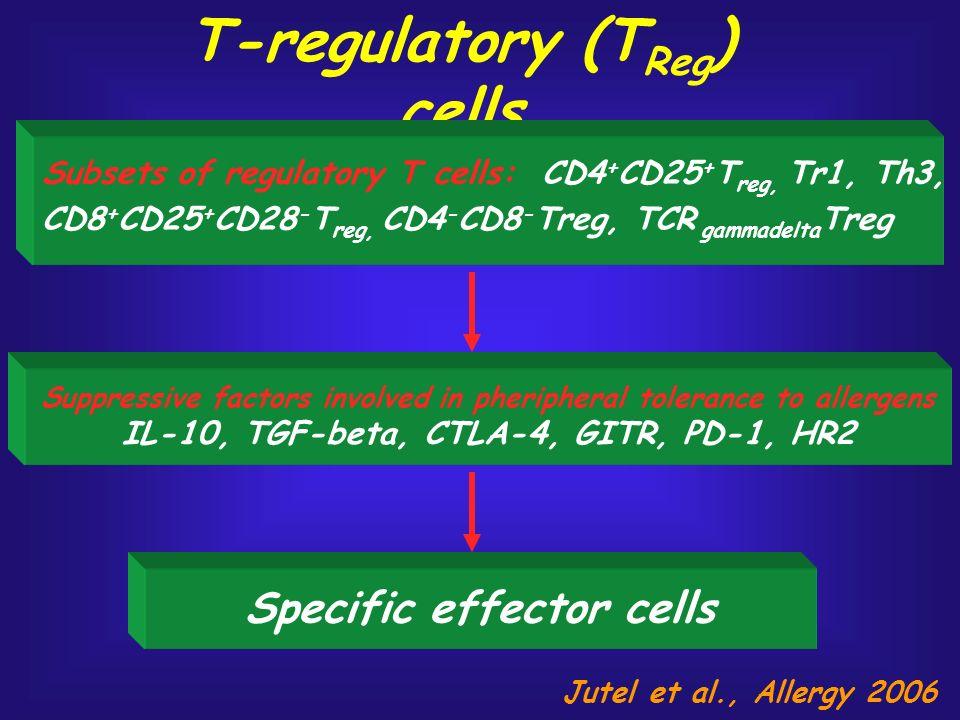 T-regulatory (T Reg ) cells Specific effector cells Subsets of regulatory T cells: CD4 + CD25 + T reg, Tr1, Th3, CD8 + CD25 + CD28 - T reg, CD4 - CD8