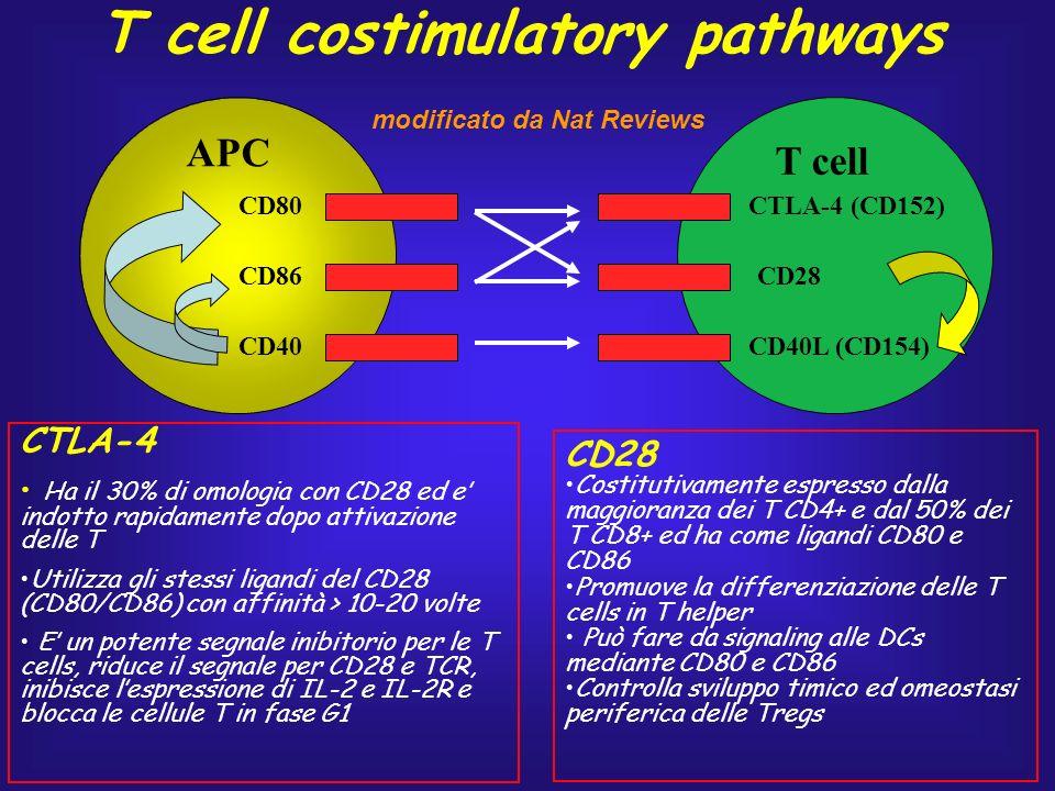 CD80 CD86 CD40 APC T cell CTLA-4 (CD152) CD28 CD40L (CD154) CTLA-4 Ha il 30% di omologia con CD28 ed e indotto rapidamente dopo attivazione delle T Ut