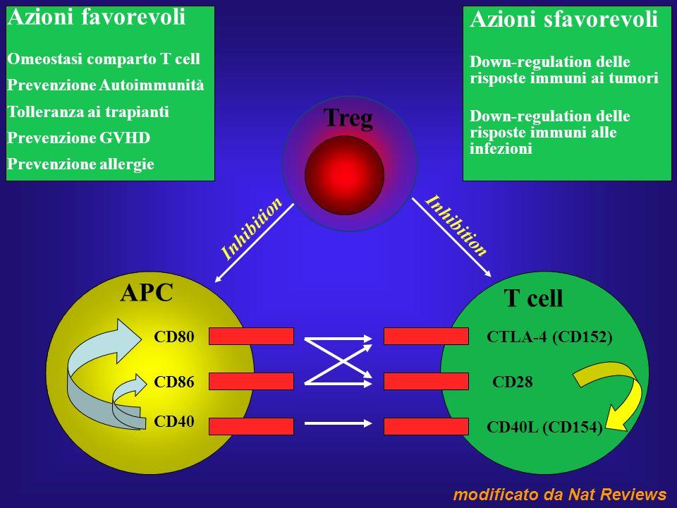 CD80 CD86 CD40 APC T cell CTLA-4 (CD152) CD28 CD40L (CD154) Treg Inhibition Azioni favorevoli Omeostasi comparto T cell Prevenzione Autoimmunità Tolle