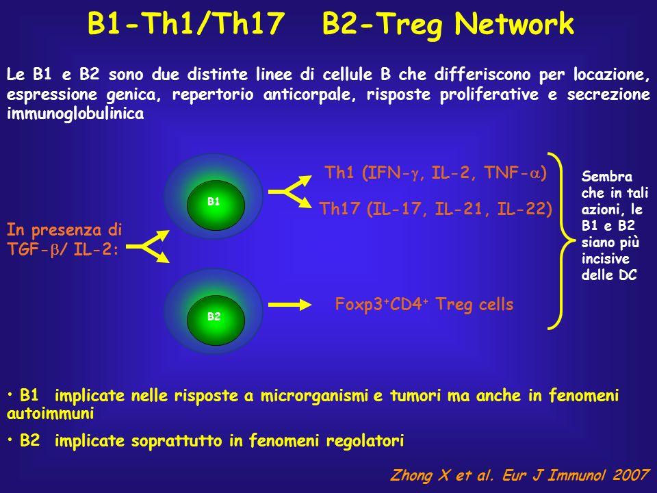 B1-Th1/Th17 B2-Treg Network Le B1 e B2 sono due distinte linee di cellule B che differiscono per locazione, espressione genica, repertorio anticorpale