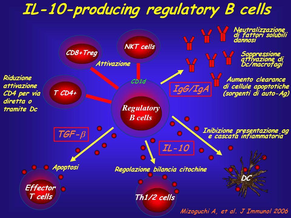 Regulatory B cells NKT cells CD8+Treg TGF- Attivazione Effector T cells Th1/2 cells IL-10 Apoptosi Regolazione bilancia citochine T CD4+ Riduzione att