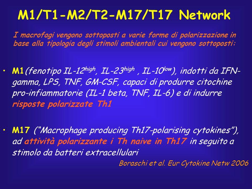 M1/T1-M2/T2-M17/T17 Network M1(fenotipo IL-12 high, IL-23 high, IL-10 low ), indotti da IFN- gamma, LPS, TNF, GM-CSF, capaci di produrre citochine pro