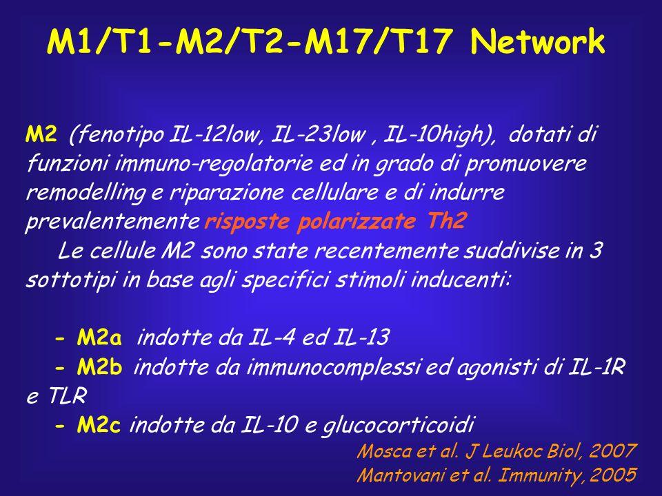 M2 (fenotipo IL-12low, IL-23low, IL-10high), dotati di funzioni immuno-regolatorie ed in grado di promuovere remodelling e riparazione cellulare e di