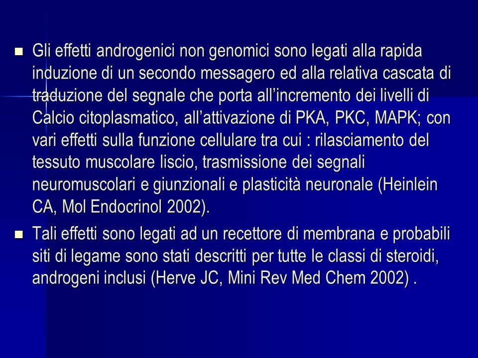 Gli effetti androgenici non genomici sono legati alla rapida induzione di un secondo messagero ed alla relativa cascata di traduzione del segnale che porta allincremento dei livelli di Calcio citoplasmatico, allattivazione di PKA, PKC, MAPK; con vari effetti sulla funzione cellulare tra cui : rilasciamento del tessuto muscolare liscio, trasmissione dei segnali neuromuscolari e giunzionali e plasticità neuronale (Heinlein CA, Mol Endocrinol 2002).