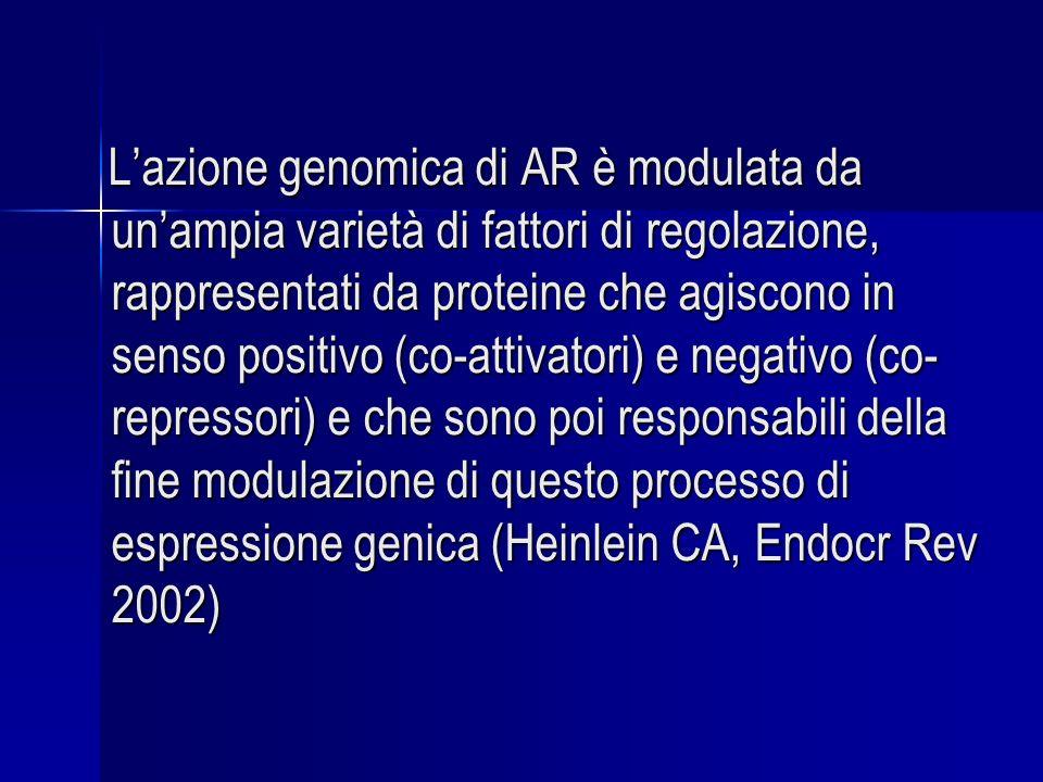 Lazione genomica di AR è modulata da unampia varietà di fattori di regolazione, rappresentati da proteine che agiscono in senso positivo (co-attivatori) e negativo (co- repressori) e che sono poi responsabili della fine modulazione di questo processo di espressione genica (Heinlein CA, Endocr Rev 2002) Lazione genomica di AR è modulata da unampia varietà di fattori di regolazione, rappresentati da proteine che agiscono in senso positivo (co-attivatori) e negativo (co- repressori) e che sono poi responsabili della fine modulazione di questo processo di espressione genica (Heinlein CA, Endocr Rev 2002)