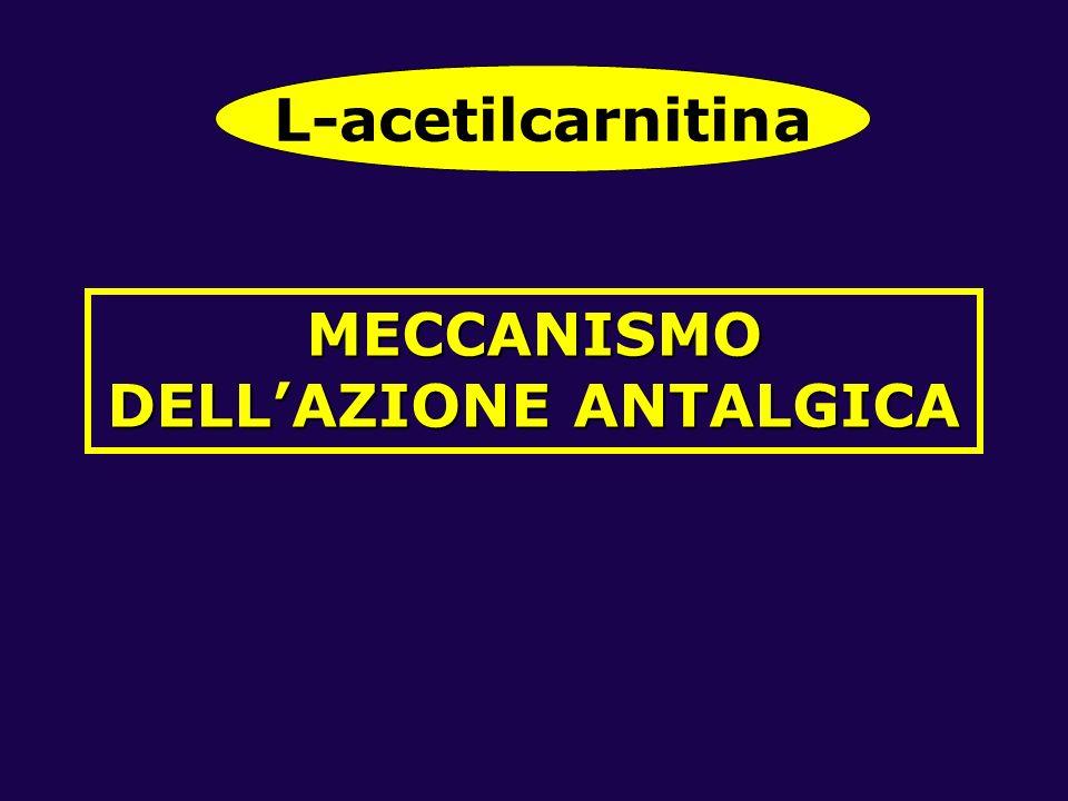 MECCANISMO DELLAZIONE ANTALGICA L-acetilcarnitina
