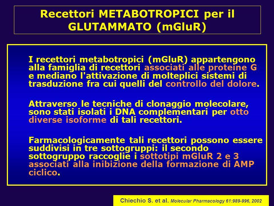 I recettori metabotropici (mGluR) appartengono alla famiglia di recettori associati alle proteine G e mediano l'attivazione di molteplici sistemi di t