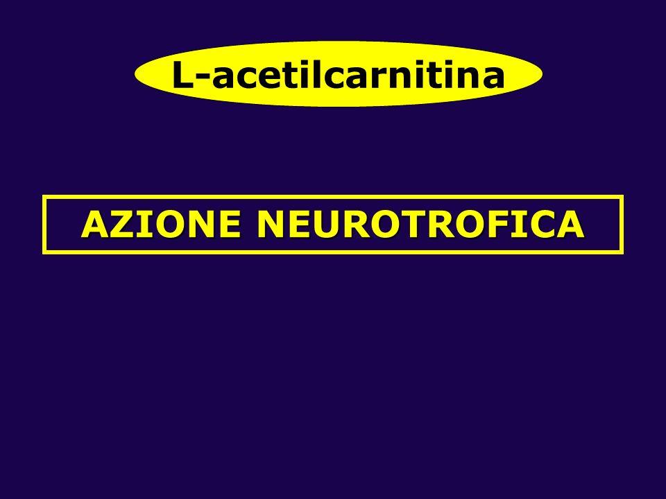 AZIONE NEUROTROFICA L-acetilcarnitina