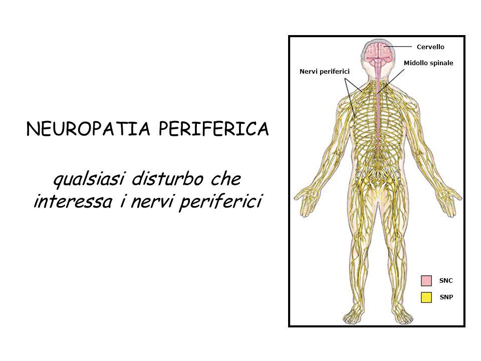 Nervi periferici Midollo spinale Cervello SNC SNP NEUROPATIA PERIFERICA qualsiasi disturbo che interessa i nervi periferici