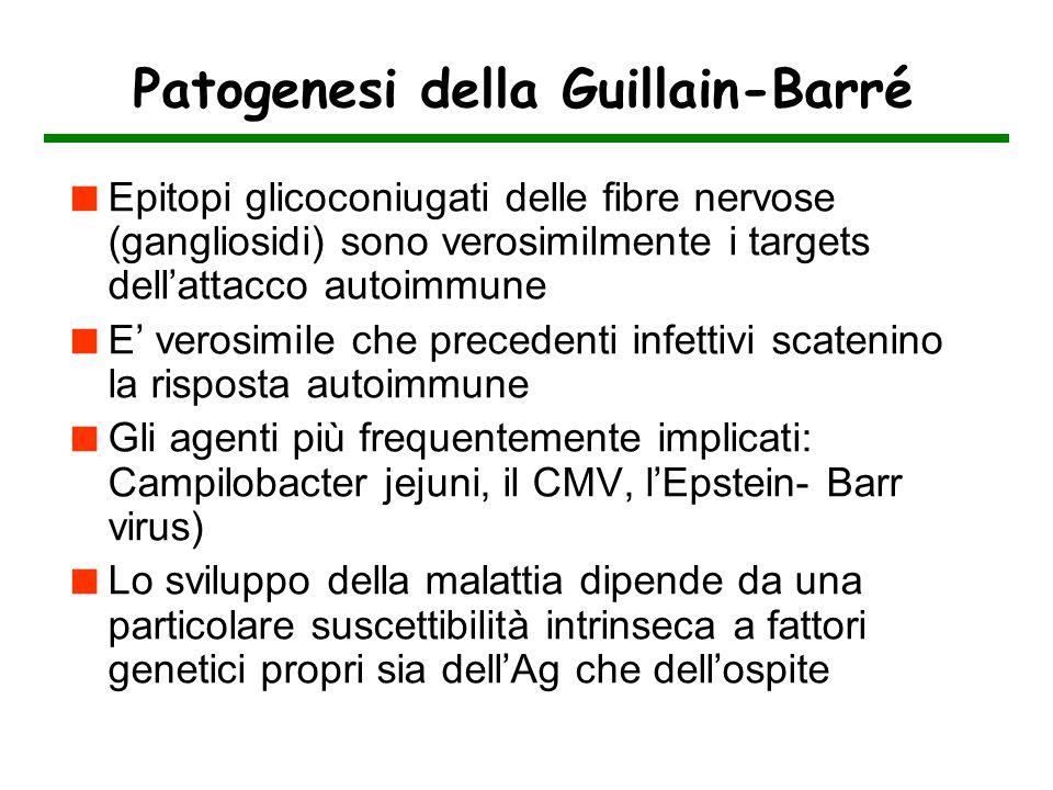 Patogenesi della Guillain-Barré Epitopi glicoconiugati delle fibre nervose (gangliosidi) sono verosimilmente i targets dellattacco autoimmune E verosi