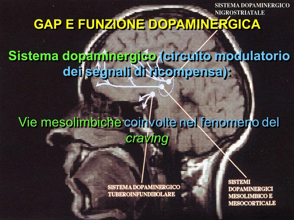 GAP E FUNZIONE DOPAMINERGICA Sistema dopaminergico (circuito modulatorio dei segnali di ricompensa): Vie mesolimbiche coinvolte nel fenomeno del cravi