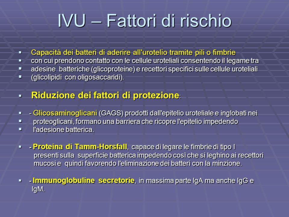 IVU – Fattori di rischio Capacità dei batteri di aderire all'urotelio tramite pili o fimbrie Capacità dei batteri di aderire all'urotelio tramite pili