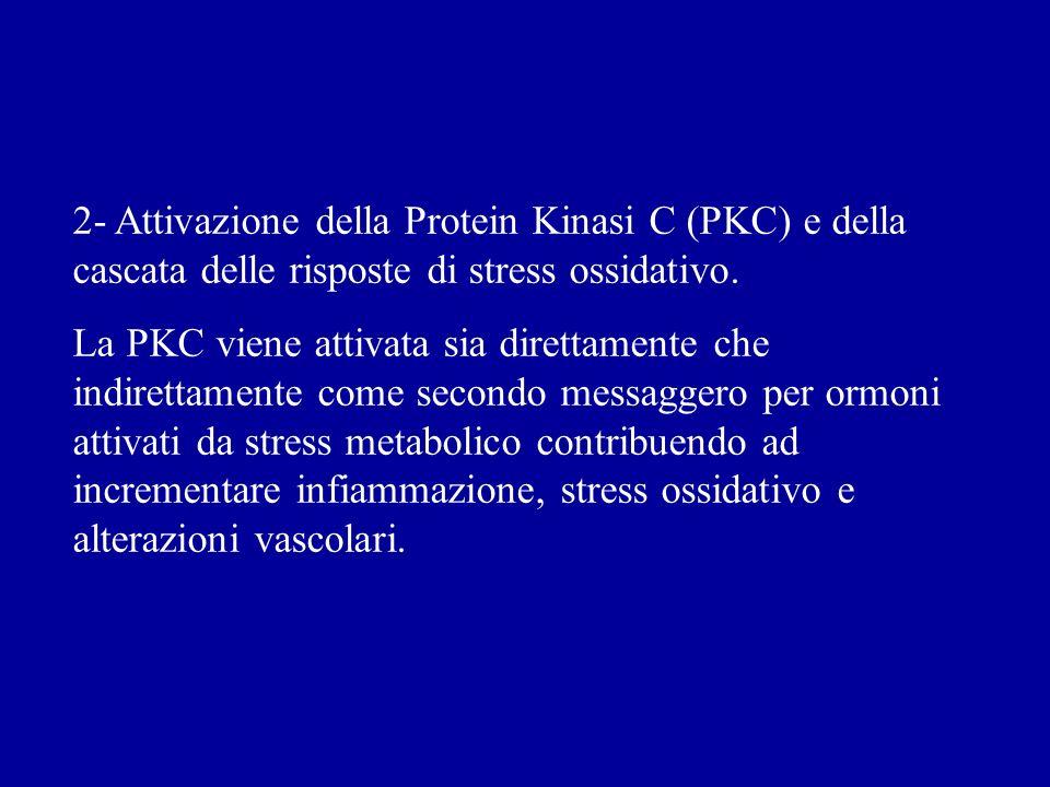 2- Attivazione della Protein Kinasi C (PKC) e della cascata delle risposte di stress ossidativo. La PKC viene attivata sia direttamente che indirettam